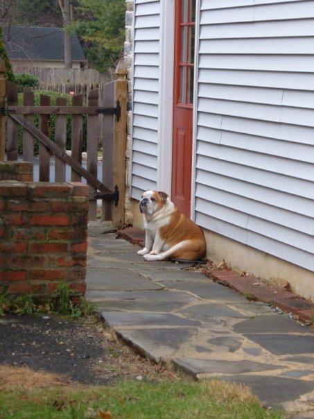 Rocky sulking